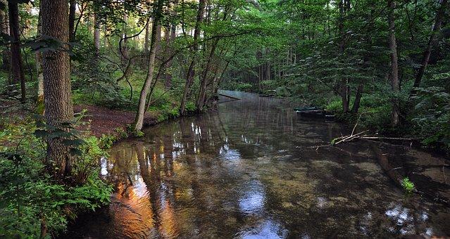 Rivière, Matin, Flux, Nature, Eau