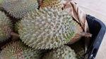 durian, fruits, sweet