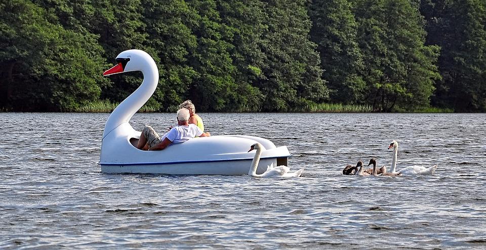 Лебедь, Лидер, Лодка, Озеро, Форма, Заманивание