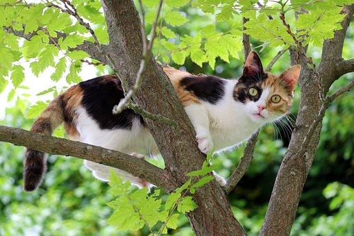 Holky mačička fotky