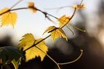 autumn, nature, foliage