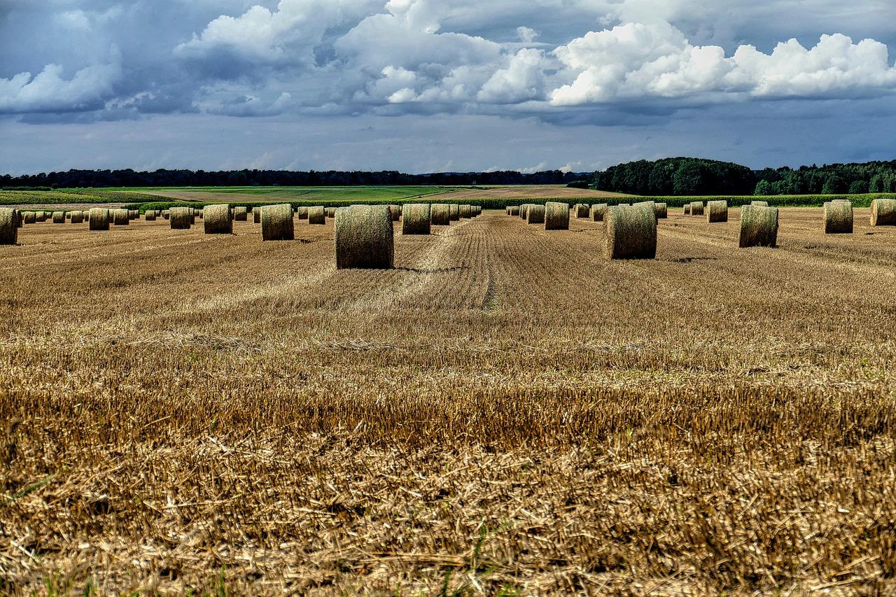 можно фото камни на сельскохозяйственных полях эстонии узнаете про