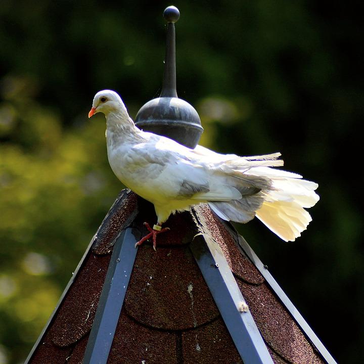 white dove feather free photo on pixabay