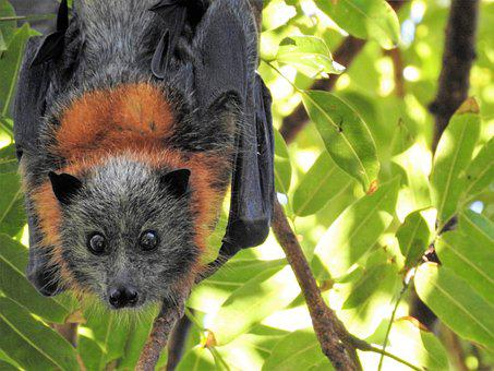 Bat, Wild, Wildlife, Environment