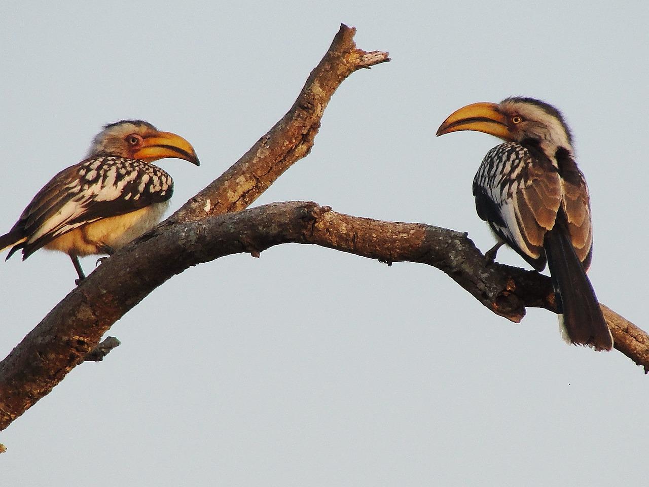 Картинки африканских птиц