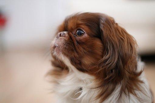 Side, Dog, Animal, Pet, Canine, Cute
