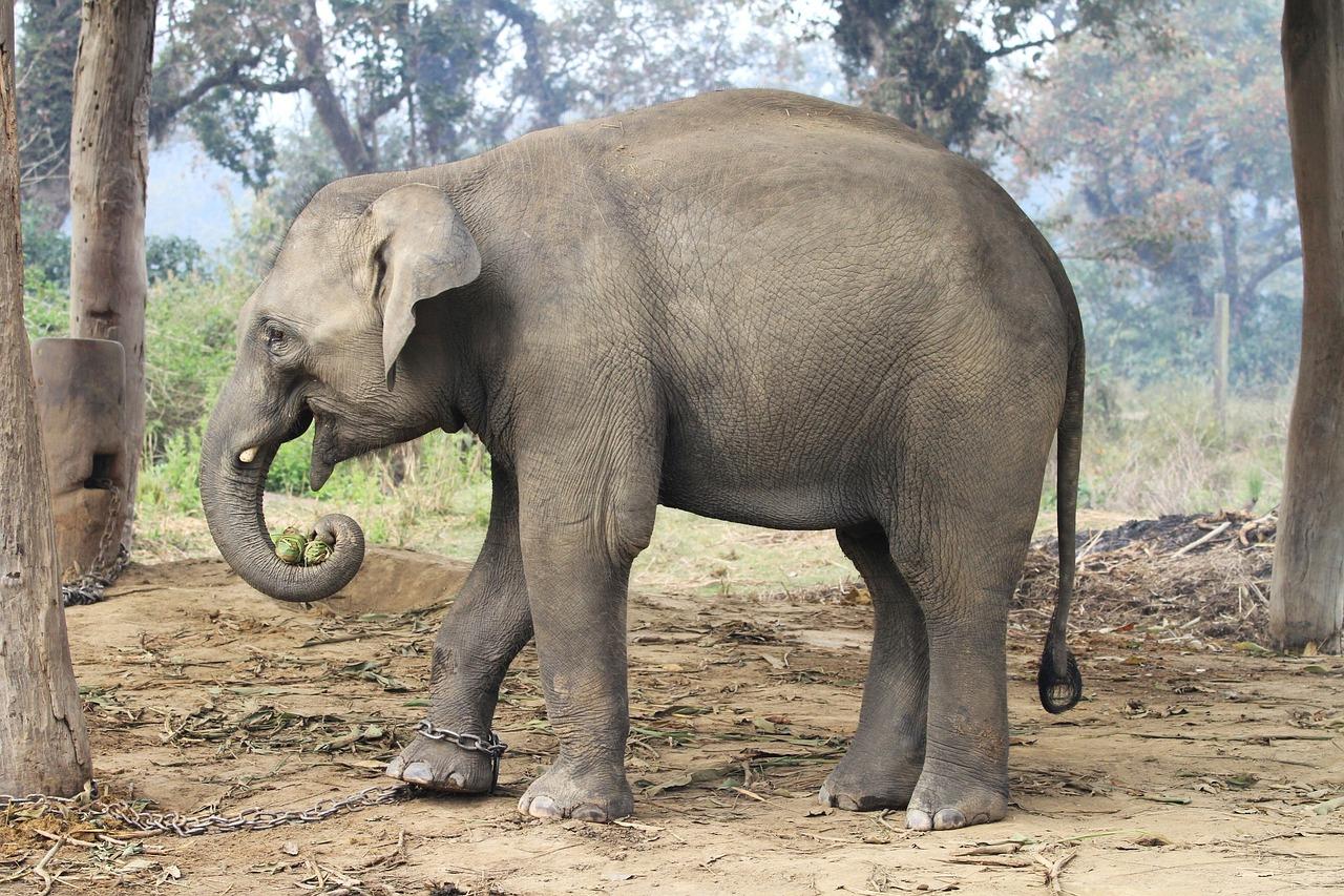 для картинки слоны в джунглях бесплатно широкоформатные обои