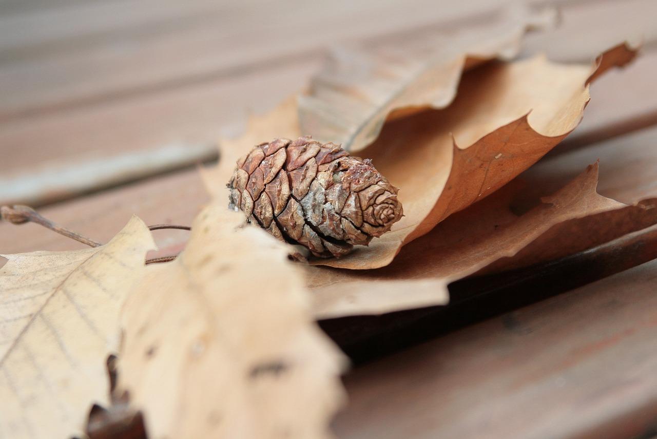 холодной картинки шишки листики наносится