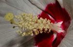 flower, postulate, red