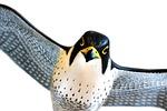 peregrine, falcon, bird
