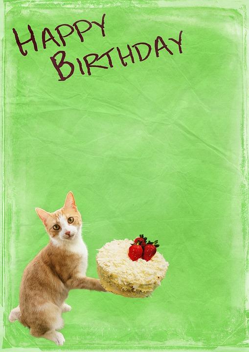 Ulang Tahun Kucing Kue Latar Foto Gratis Di Pixabay