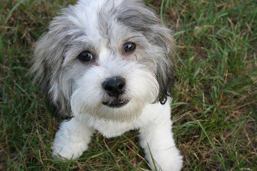 Cute, Animal, Dog, Doggy, Canine, Puppy