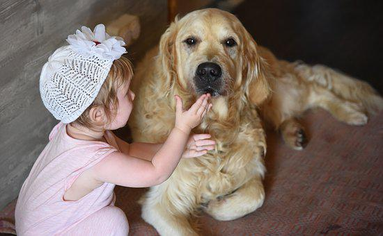 Dog, Girl, Retriever, Golden, Friendship