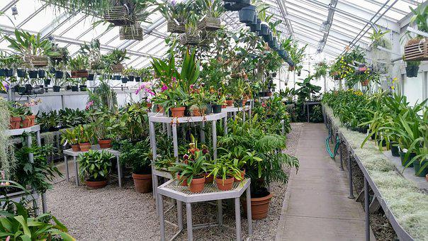 Greenhouse, Indoor, Green House, Plants