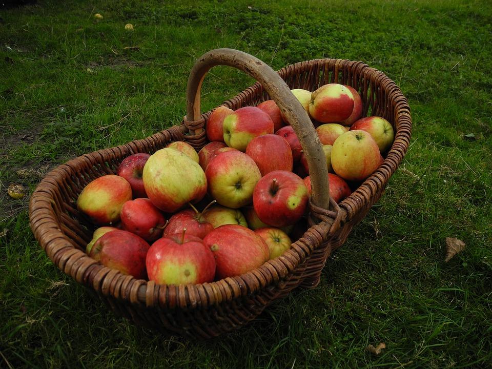 Vendemmia, Giardino, Apple, Autunno, Apfelernte, Frutta