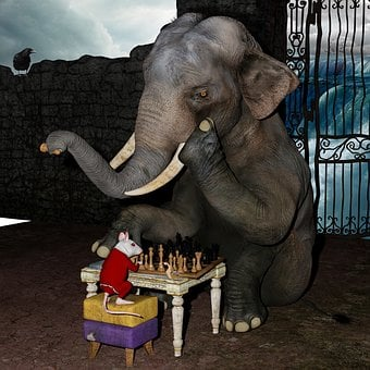 Play Chess, Elephant, Mouse, Snail