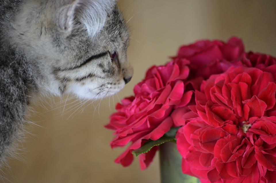 Flowers Dear Sweet · Free photo on Pixabay
