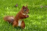 animal, mammal, squirrel