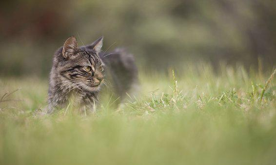 Cat, Grass, Animal, Overview