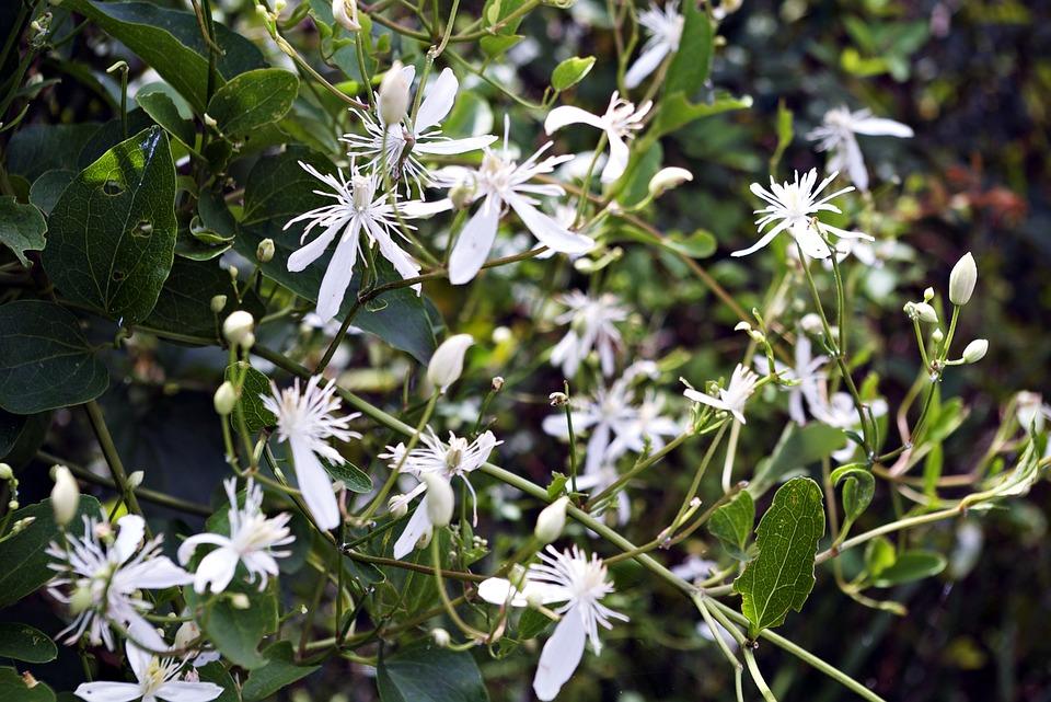 Blumen Blume Weiße · Kostenloses Foto auf Pixabay
