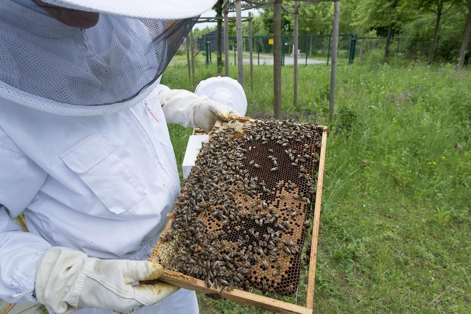 apiculteur gratuit