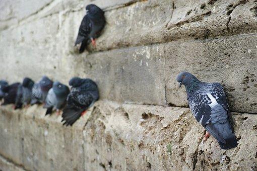siatki przeciw ptakom