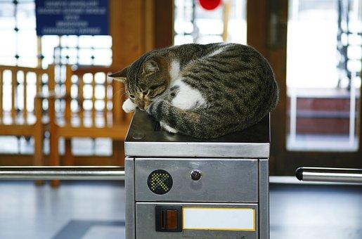 Cat, Subway, Funny, Sleepyhead, Sleep