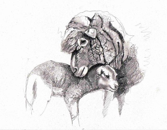 drawing sheep lamb  u00b7 free image on pixabay
