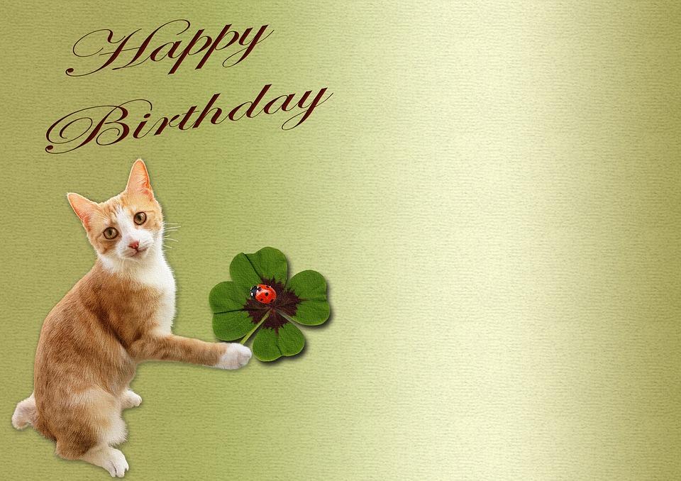 Geburtstag Katze Glucksklee Kostenloses Bild Auf Pixabay