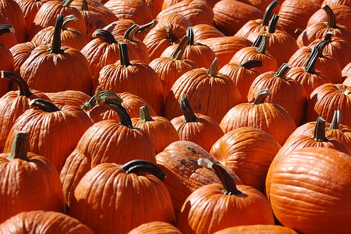 Pumpkin, Autumn, October, America