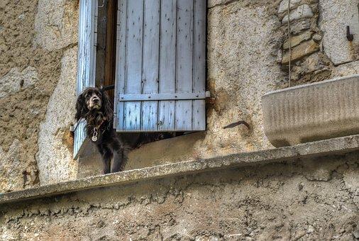 Dog, Window, Waiting, Animal, Cute, Pet