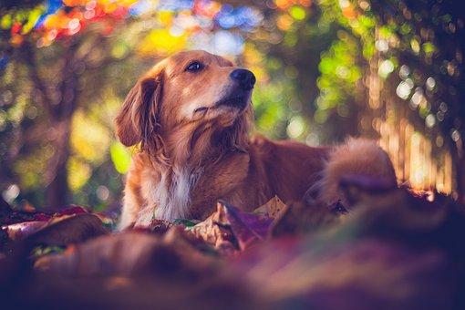Pet, Cachorro, Cão, Filhote, Canino