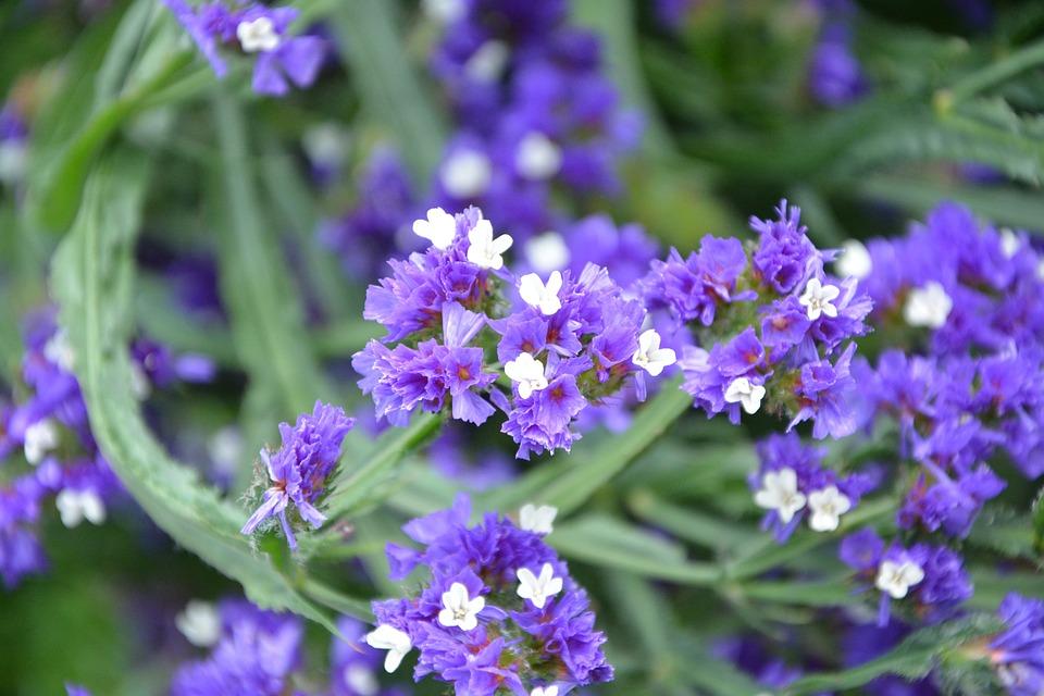 Bunga Violet Putih Alam Foto Gratis Di Pixabay