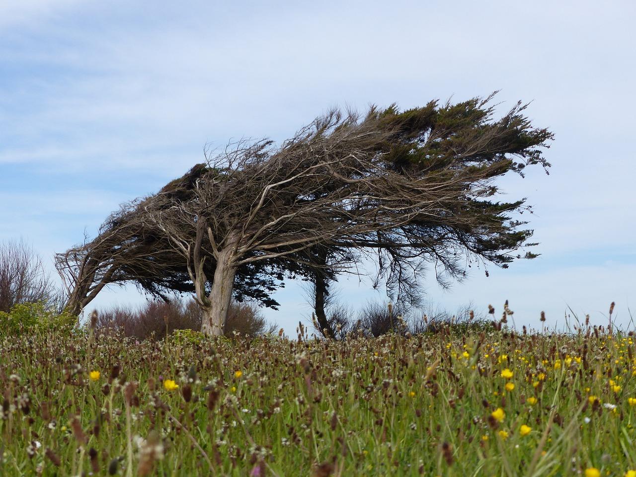 объектов картинки как деревья гнет ветер растение