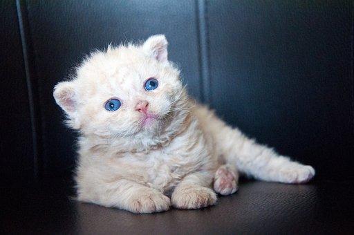 Tuk mačička obrázok