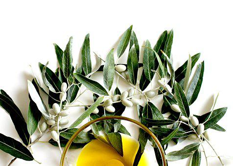 Olive, Olive Oil, Olive Leaf, Plant, Eat
