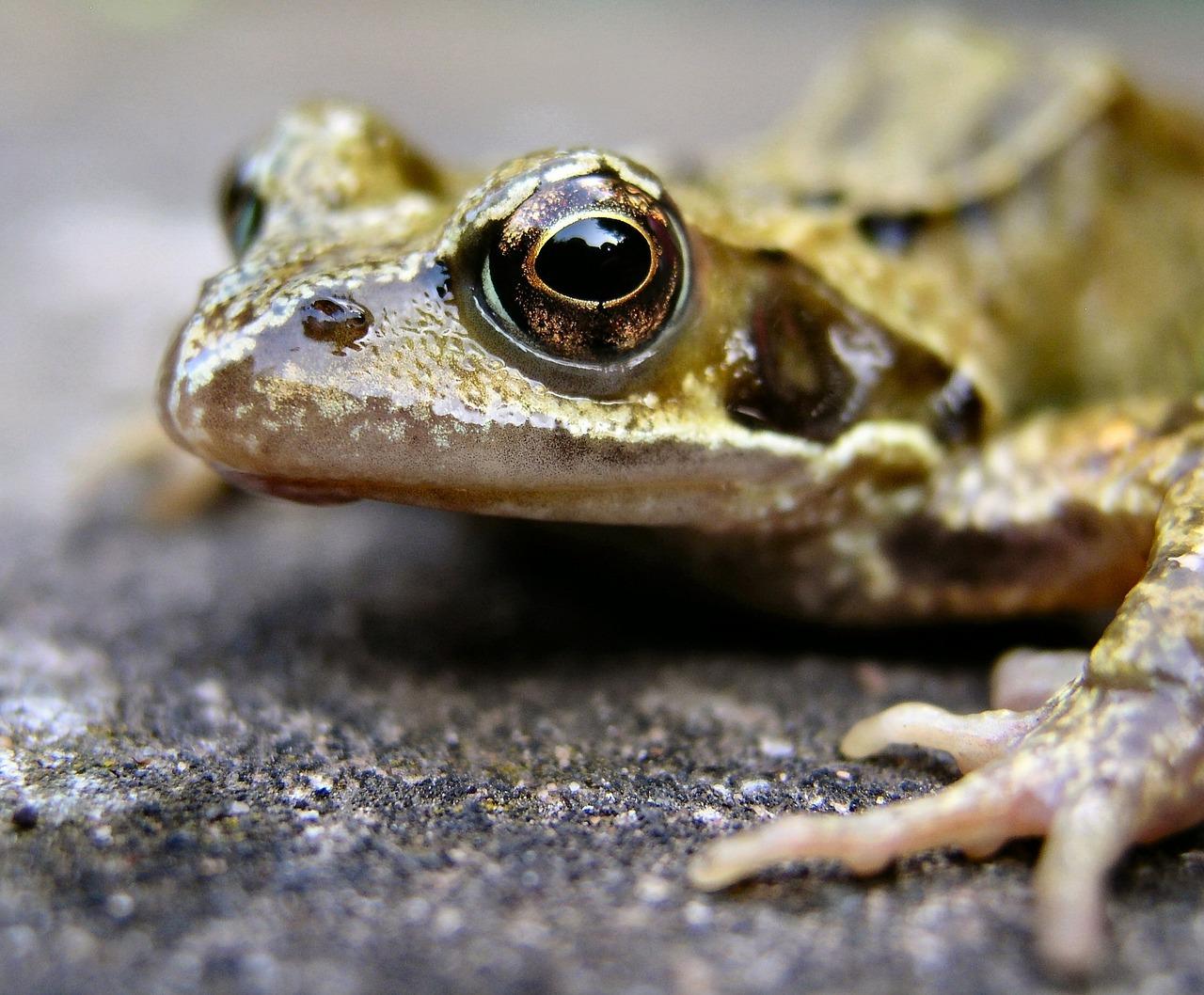 больше амфибии животные фото и название ужасом