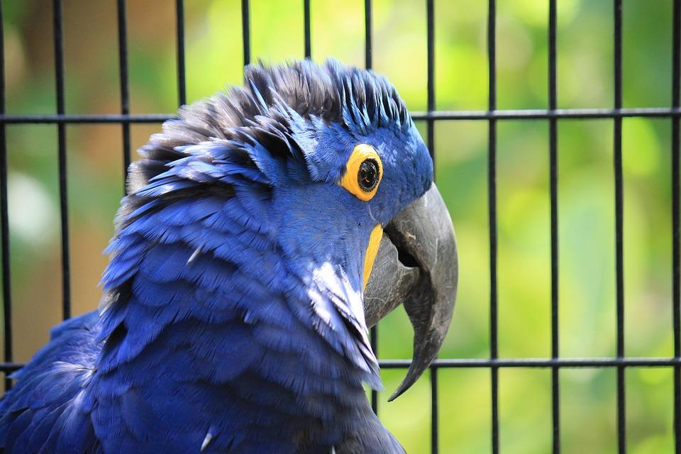 Well-known Arara Azul Arara-Azul-Grande Blue · Foto gratuita no Pixabay QE98