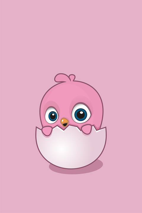 Wallpaper Egg Little Chick Chicken Cute Funny