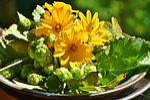 hops, sunflower, green