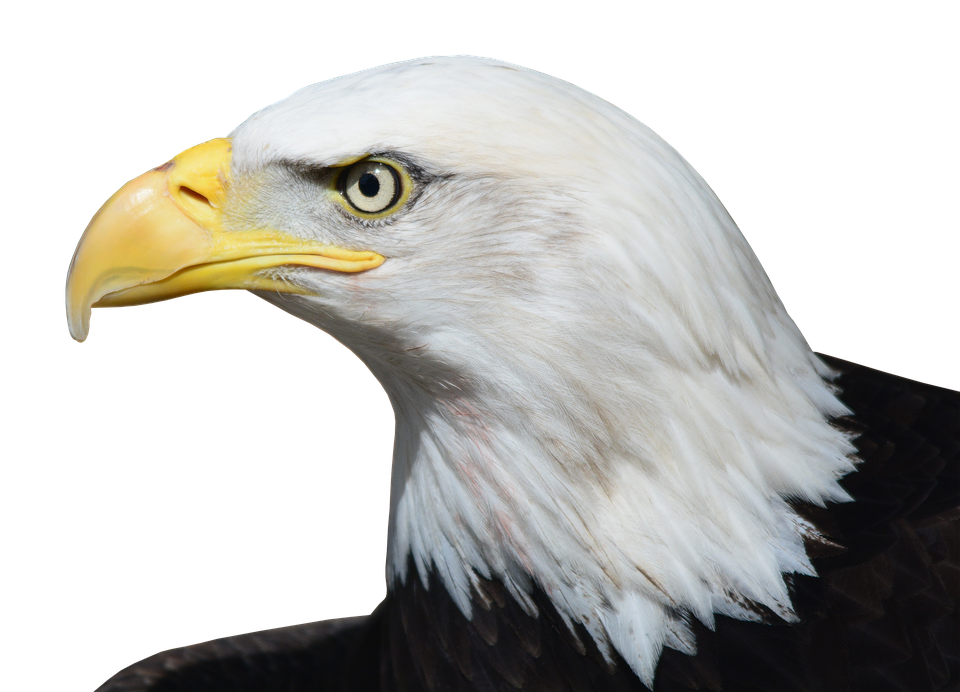 Flying, Eagle - Free pictures on Pixabay