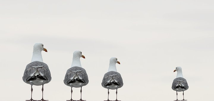 Gulls, Fun Photo, Composing