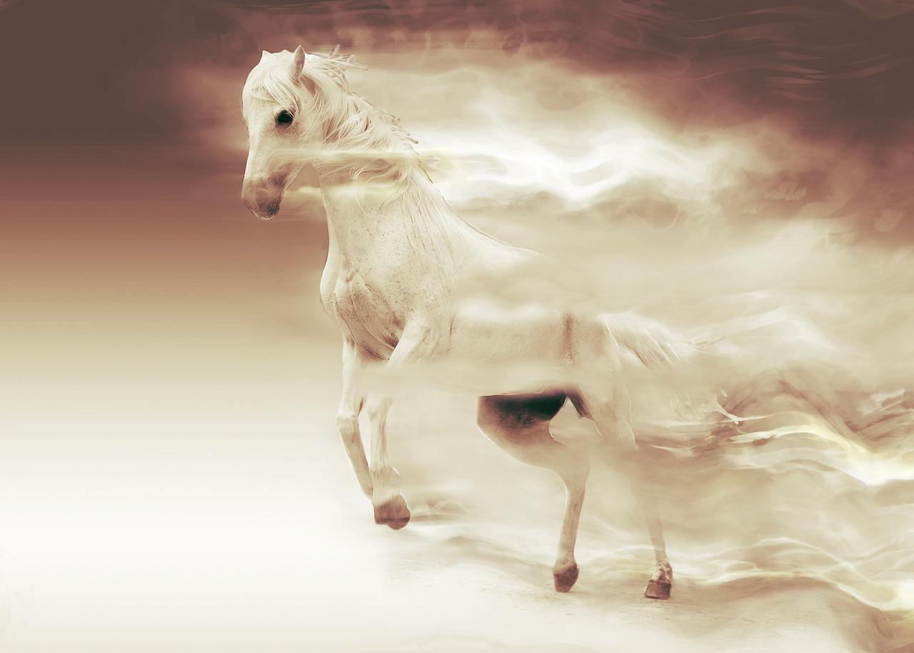 horse,white-horse,