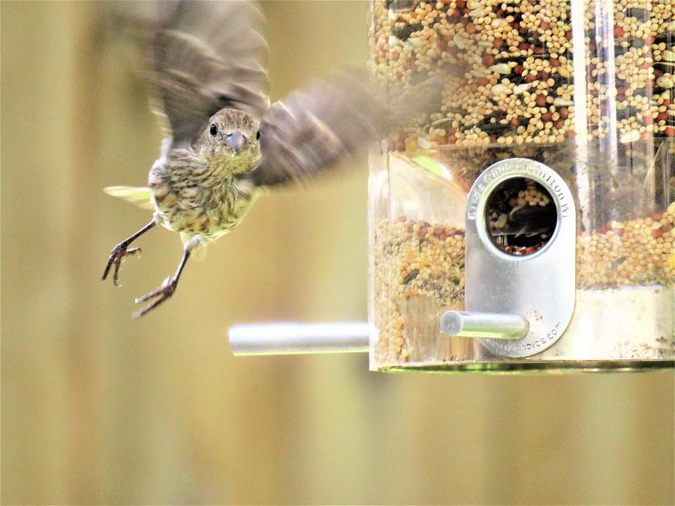 Bird, In Flight, Wildlife, Interesting