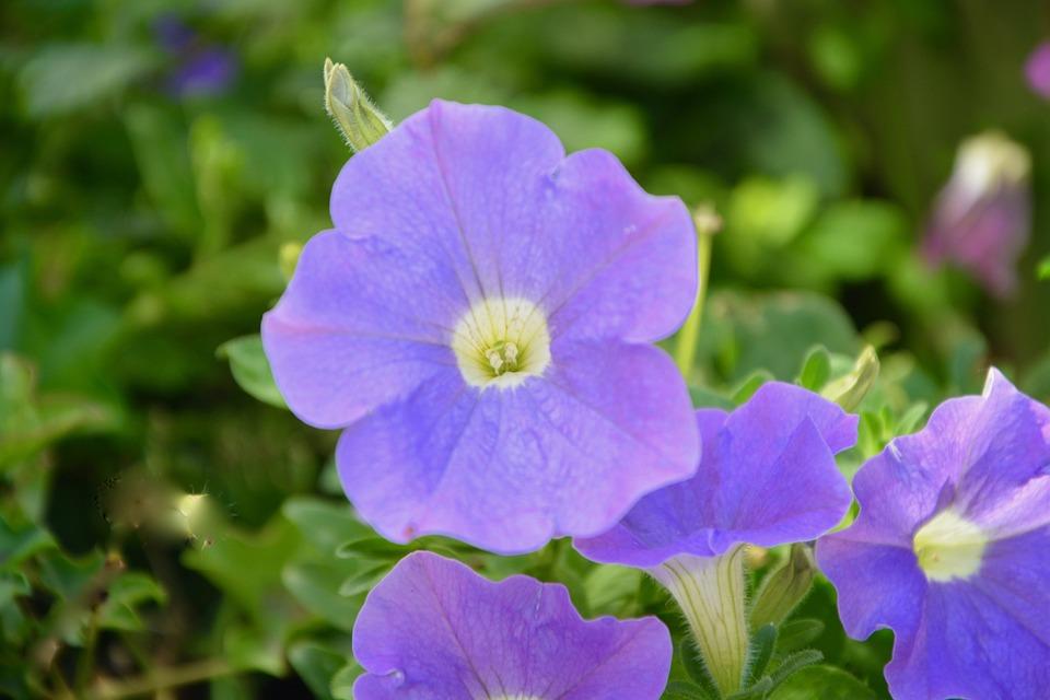 Fleurs Mauve Plante Jardin Photo Gratuite Sur Pixabay