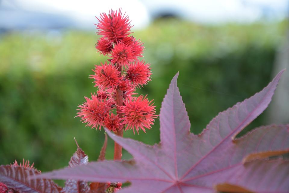photo gratuite: fleur rouge, plantes, massif - image gratuite sur