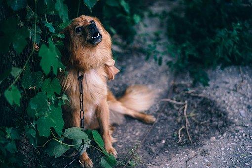 Animal, Attention, Bark, Big, Bitch