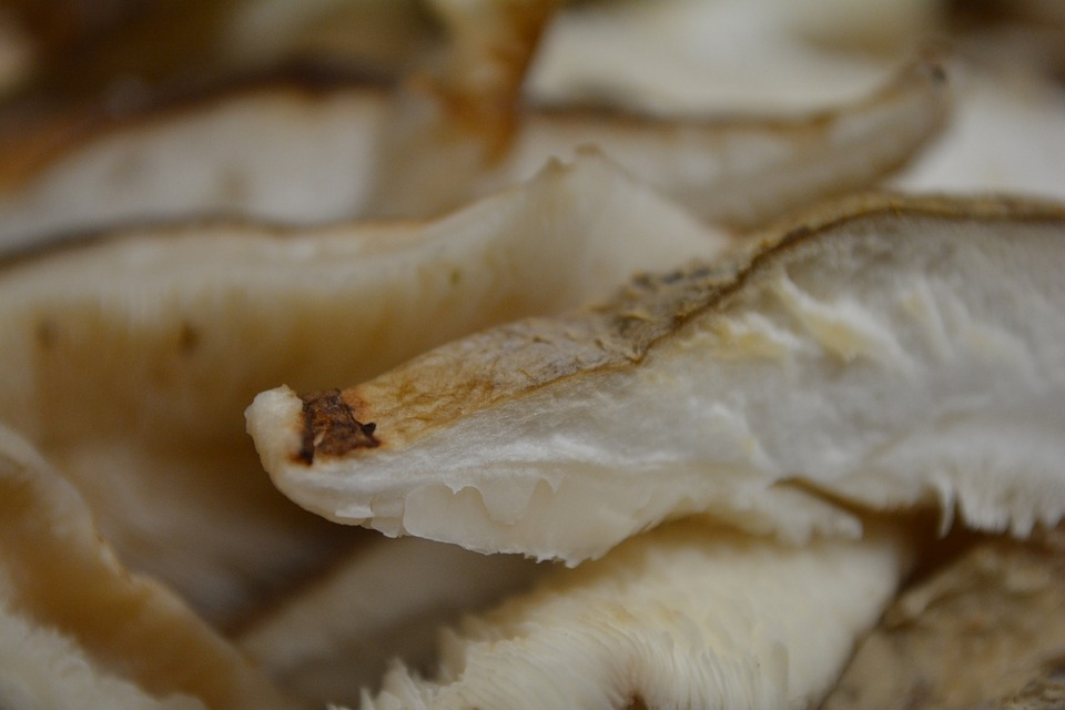 Shiitake, Fungo, Funghi Medicinali