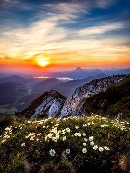 L'Autriche, Fleurs, Fleurs Sauvages