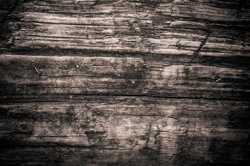 free photo texture  wood  monochrome free image on Wood Bark Texture Vector Wood Plank Vector